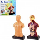 Настольная игра The Human Body 3301