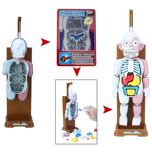 Настольная игра Модель человеческого тела YC5190A